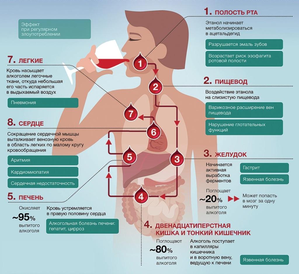 Инфографика алкоголь