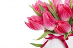 мини tulips-bow-spring-tyulpany-8